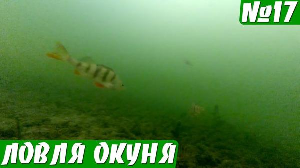 Реакция Окуня на Раттлин, Мормышку и Балду. Подводные съемки.