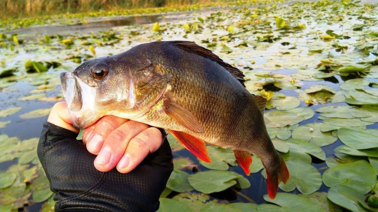Рыбалка которую спас отводной