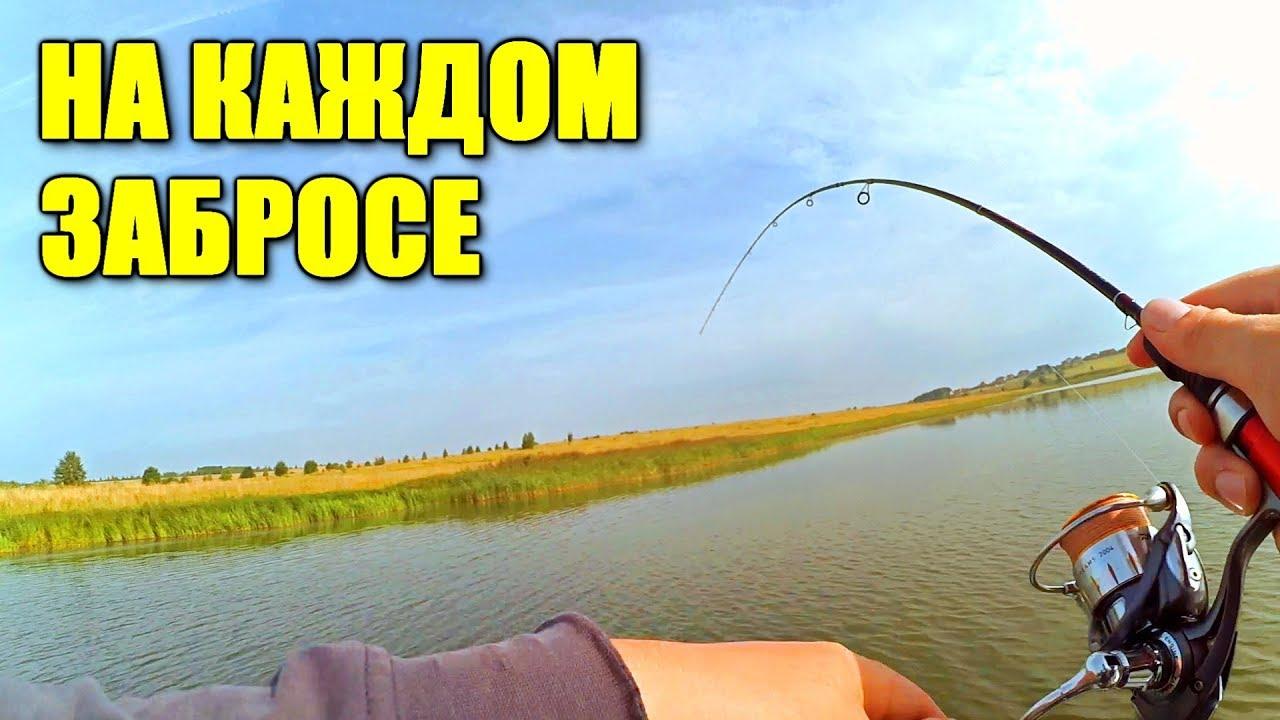 ИХ ТУТ ПРОСТО КИШИТ!!! Рыбалка на ПИЛЬКЕР и прочее!