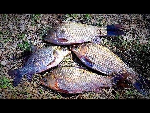 Первая рыбалка на карася 2018. Рыбалка на донку и поплавочную удочку. Рыбалка на велосипеде