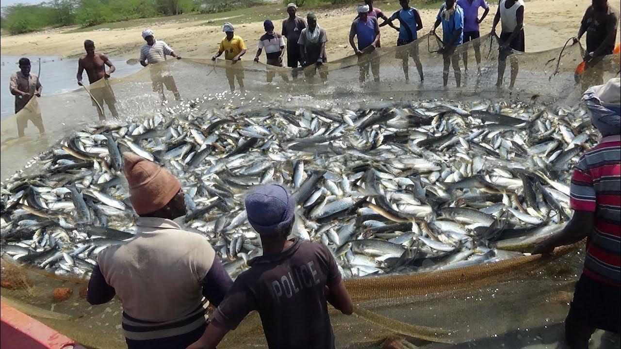LONG LINE FISHING VIDEOS
