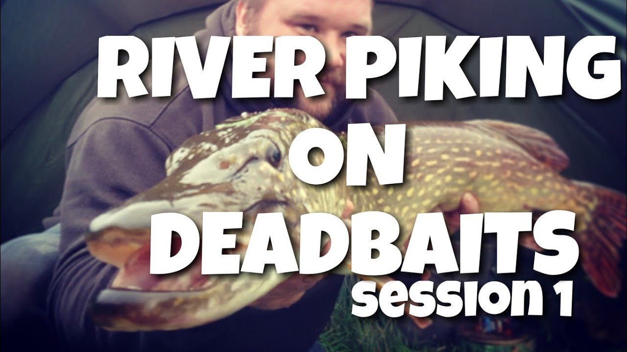 River Pike Fishing With Deadbaits —  Session 1