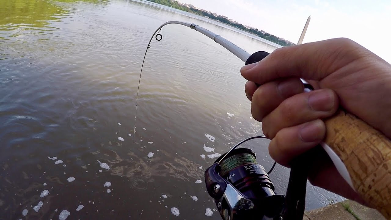 Hunting Down the FRANKENFISH in Washington D.C. (Bank Fishing the Tidal Basin)