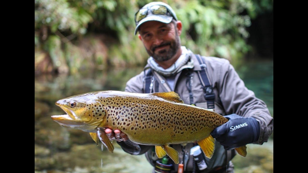 Fly fishing New Zealand 'the DREAM STREAM'