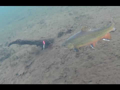 Ice Fishing Brook Trout — Under Water View!
