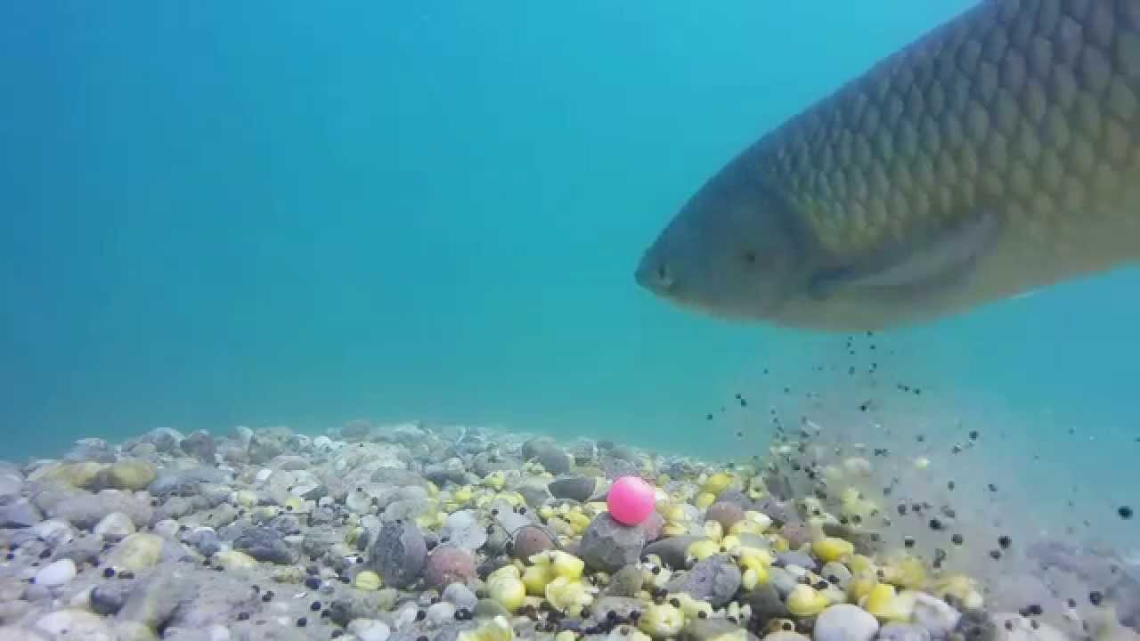 My carp fishing
