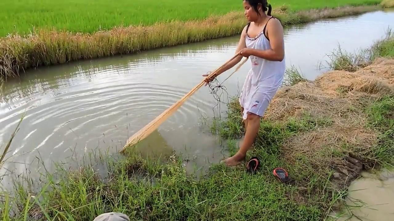 Amazing Fishing at Pailin Province — Cambodia Traditional Fishing — Khmer  Net Fishing (Part 341)