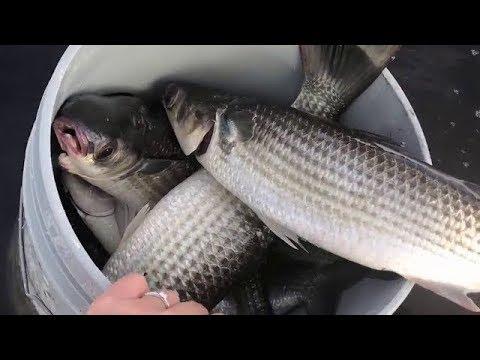 Cast Net Fishing BIG Mullet In Florida