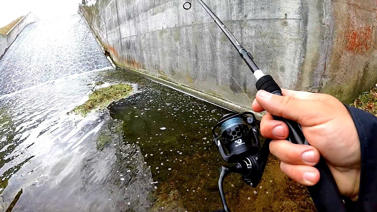 Unexpected Catch While Fishing a Small Creek!!