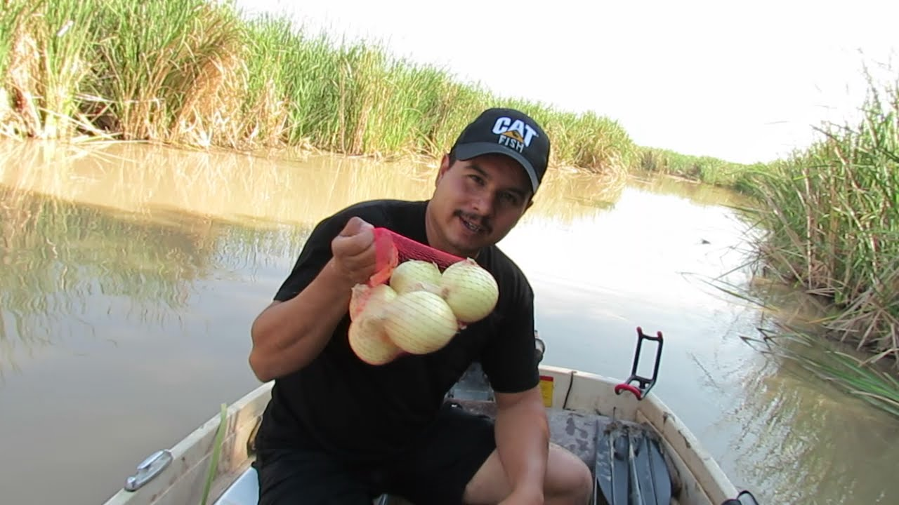 Fishing For Catfish With Onions??