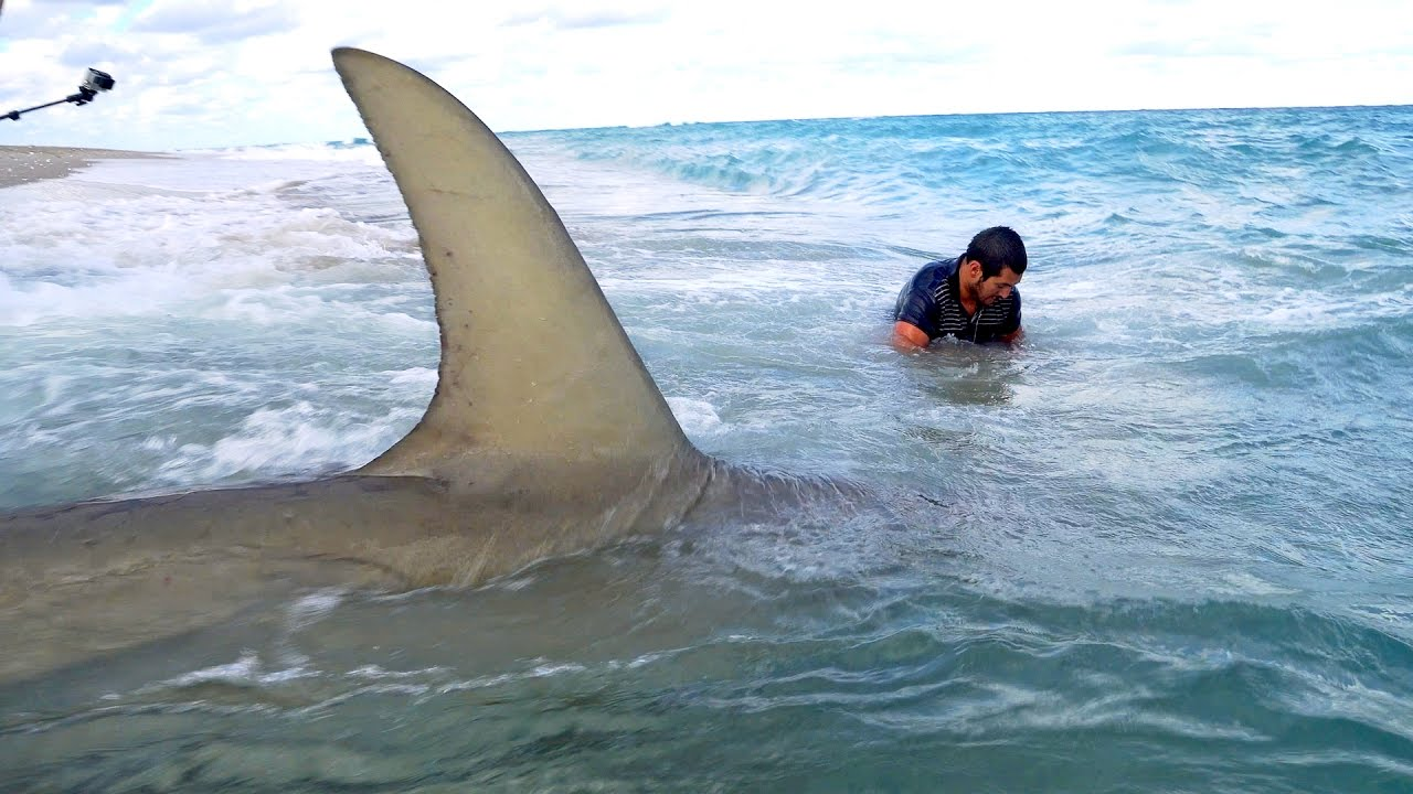 Monster Sharks caught Fishing from the Beach — 4K