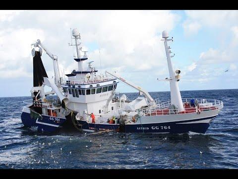 Mackerel Fishing in The North Sea September 2013
