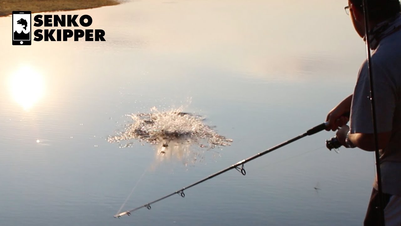 Catfish Fishing: This bait works so fast.