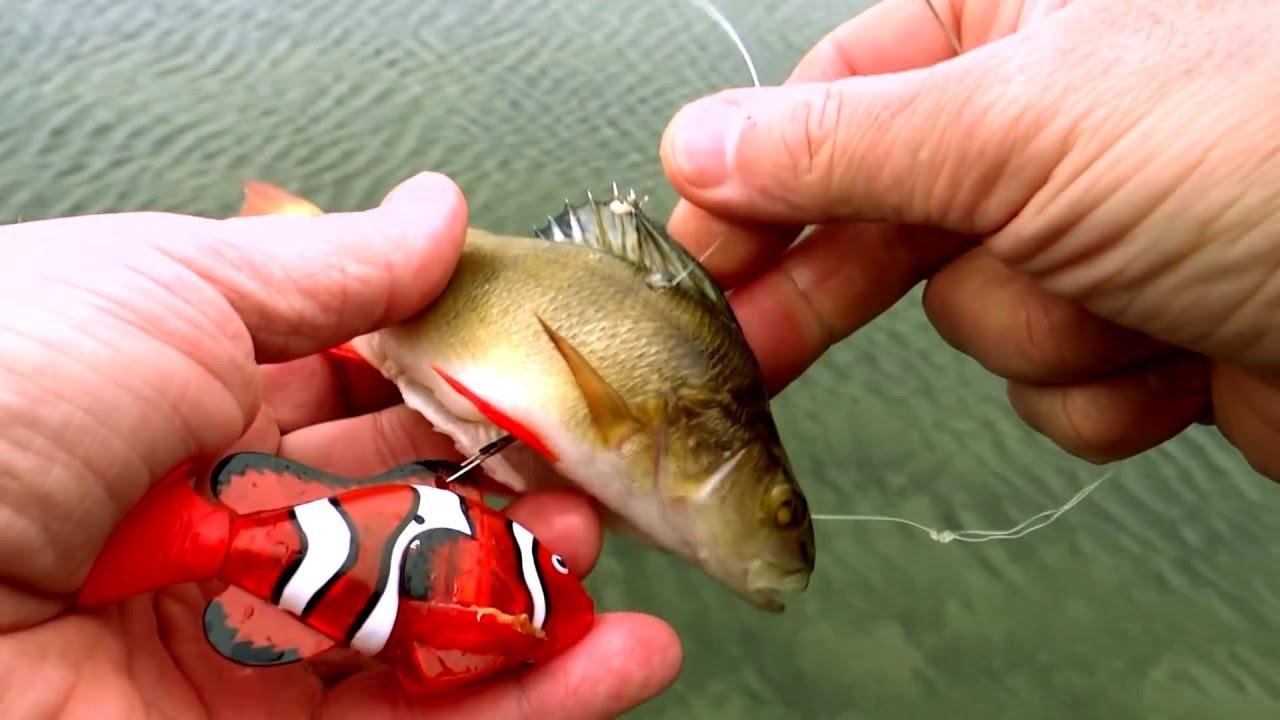 Weird & crazy fishing: pike attacks robot fish. 奇怪和疯狂的钓鱼机器人攻击机器人鱼 Pesca loco lucio ataca a robot