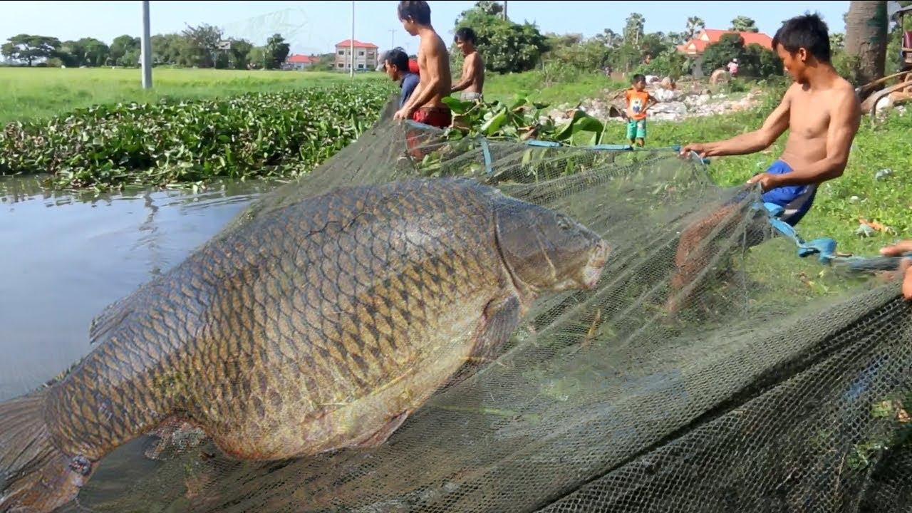 Net Fishing   People Catching a lot Fishing in Siem Reap Province