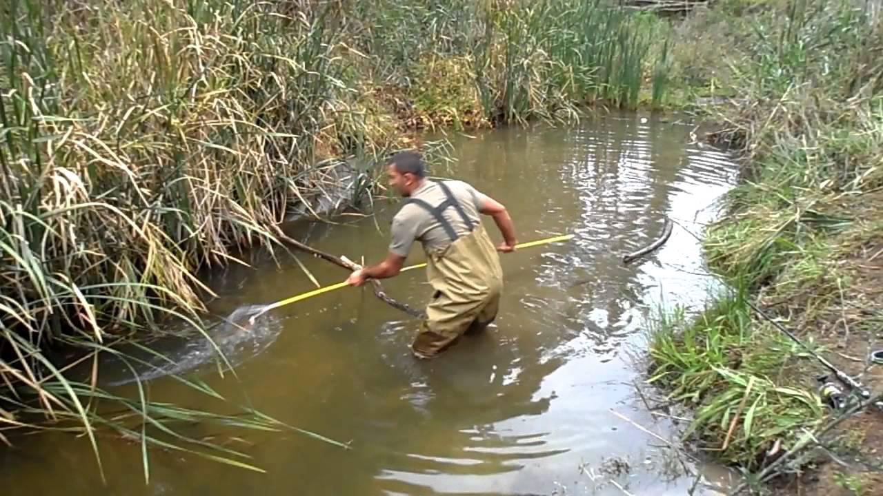 carp spear fishing