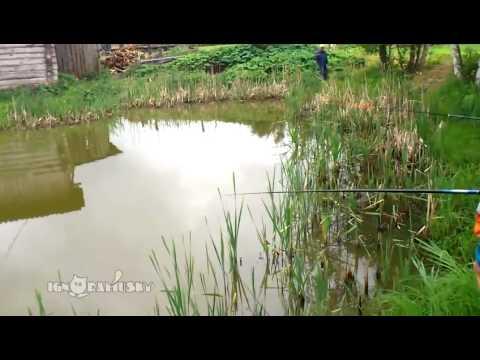 Ambush fishing / Засада на рыбалке