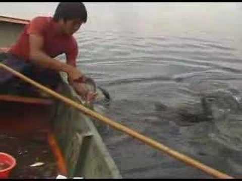 China 2005 28 — Fishing with cormorants