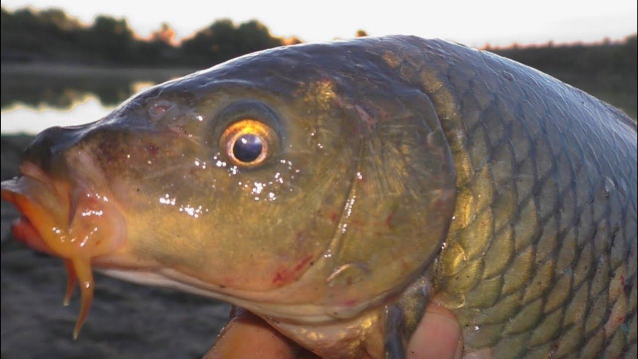 Рыбалка. Раки спасли улов. My fishing