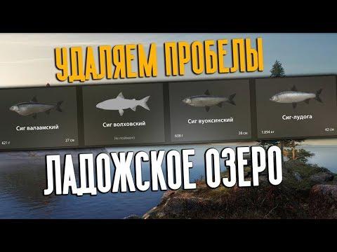 РУССКАЯ РЫБАЛКА 4. Ладожское озеро — Сиг, Рипус и Корюшка
