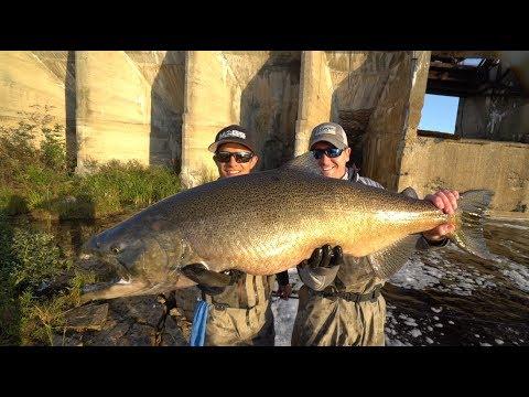 Shore Fishing For GIANT King Salmon — I'm Back!