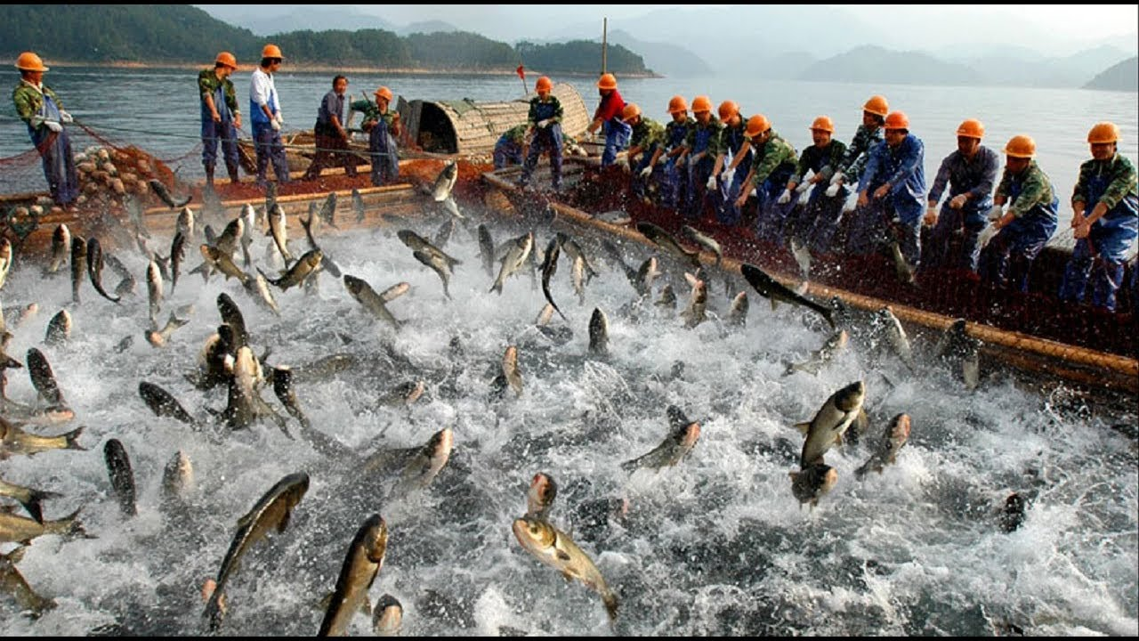 Amazing Big Fishing Catching in The Sea, People Catching Fish By Using The Net