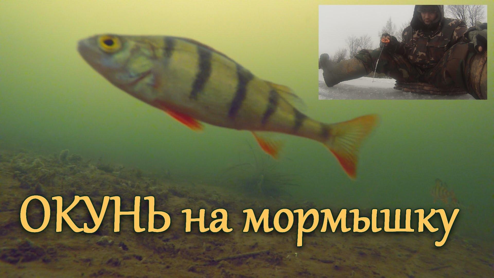 Зимняя рыбалка с камерой. Ловля окуня на мормышку. Подводные съемки.  Первый лед