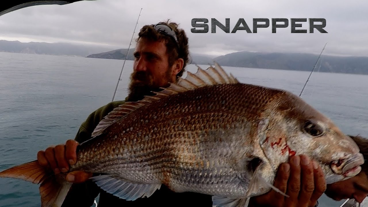 Fishing for Snapper in Nelson New Zealand with Josh James