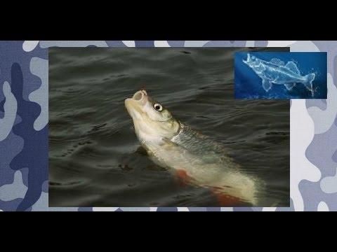 Рыбалка ультралайт.Ловля голавля спиннингом