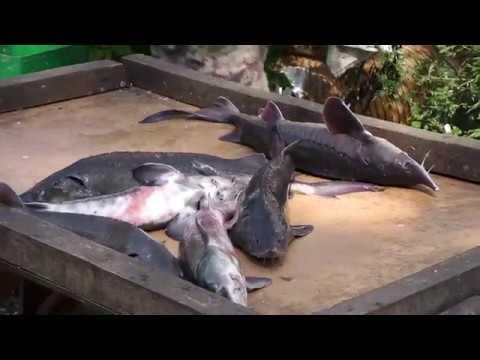Рыбалка у Бородина 15 07 2018