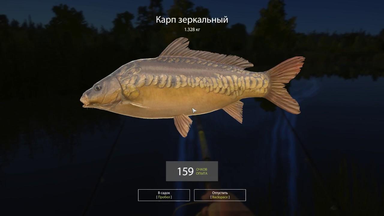Русская рыбалка 4 — озеро Медвежье — Карп под лагерем
