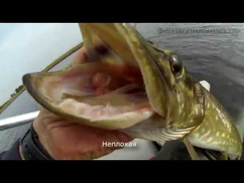 How to catch pike fish with dead baits & fishing lures in Ireland. Рыбалка на щуку с тушками.