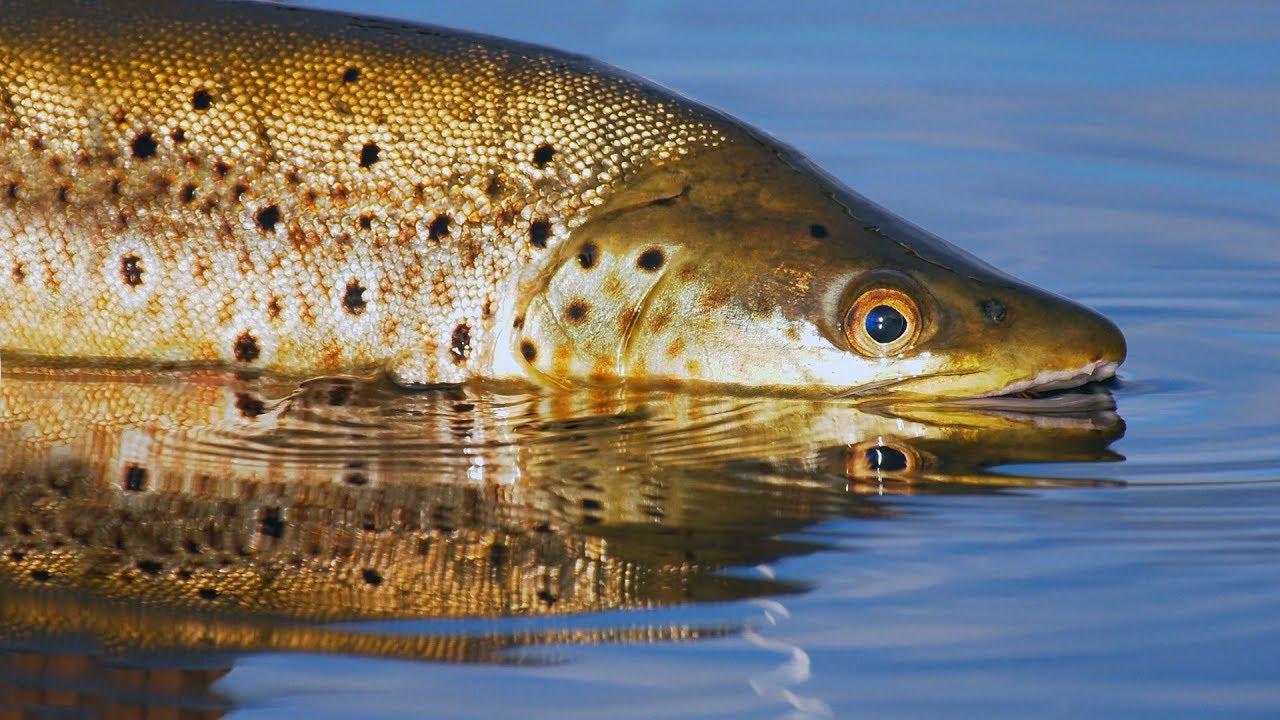 Tasmania, Australia Fly Fishing by Todd Moen