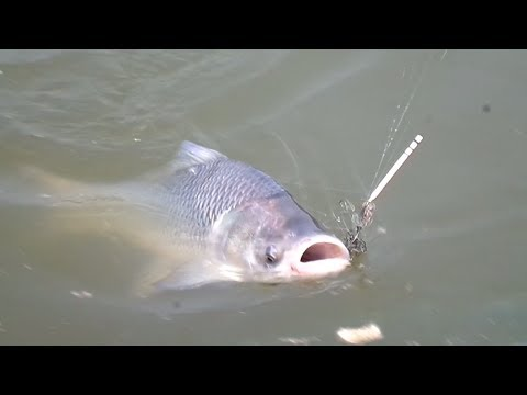 Big Catla Fish Hunting And Fishing By Fish Hook — Catla Fishing Videos By Fish Watching
