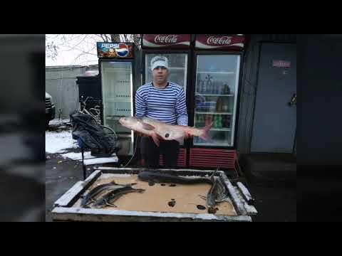 Рыбалка у Бородина