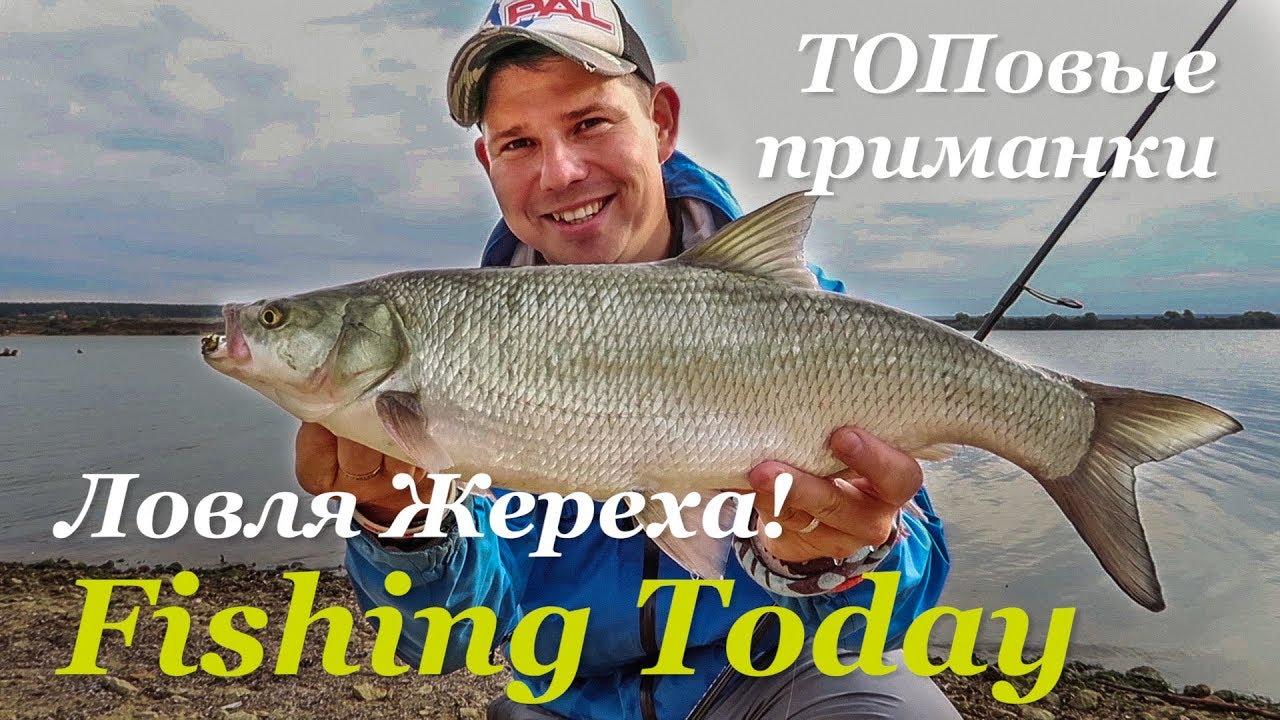 ЖЕРЕХОВОЕ БЕЗУМИЕ. Топовые приманки — Fishing Today