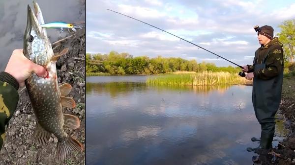 Только одна Приманка сработала как надо! Ловля щуки в мае на спиннинг с берега