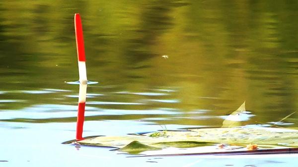 Рыбалка на удочку весной — Клёв был хороший, даже черви кончились!